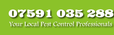 call reaper pest control edinburgh fif west lothian and kinross on 07591 035 288